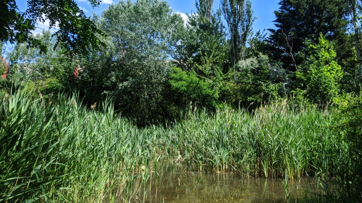 Stave Hill Ecological Park - TCV